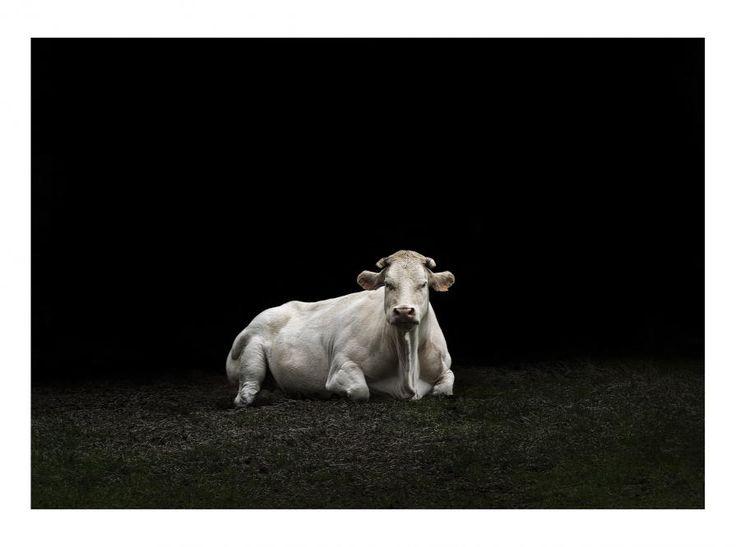 '7075' by Retouch http://www.premioceleste.it/opera/ido:388291/ … #portrait #photography #fineart
