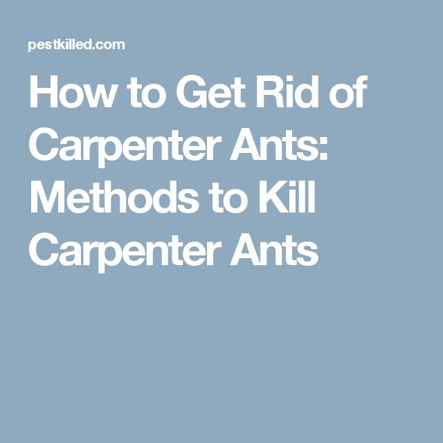 How to Get Rid of Carpenter Ants: Methods to Kill Carpenter Ants