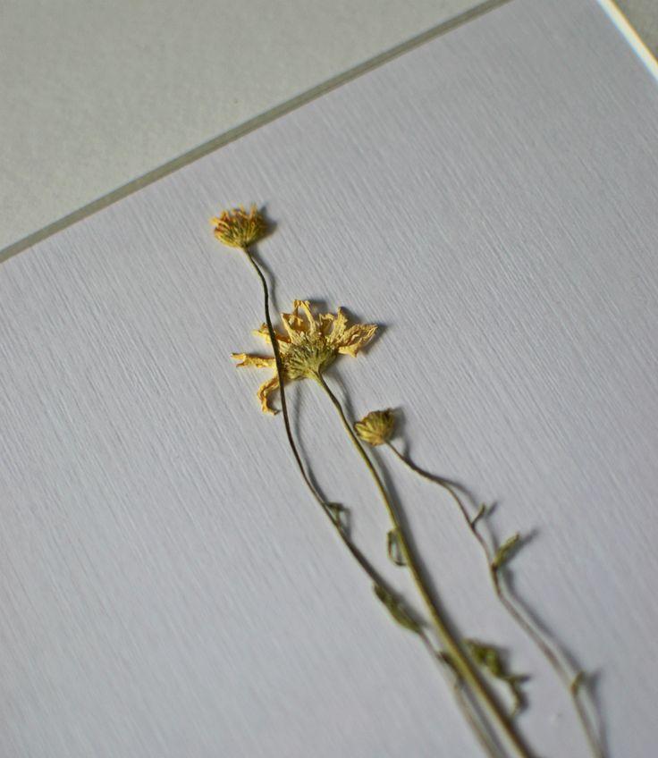detail / flower