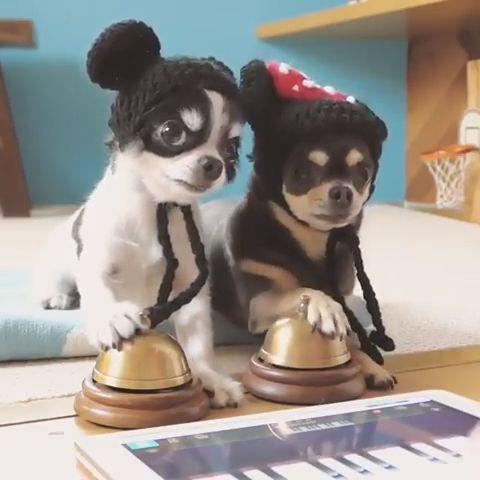 Dulces cachorritos- Cachorros entrenando-lindos videos de perros   – Hunde Videos I mydogworld.de