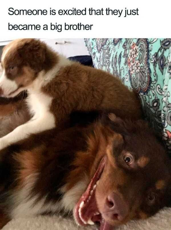 Pin By Lora Lanning On Dogs Cute Baby Animals Cute Dogs Cute