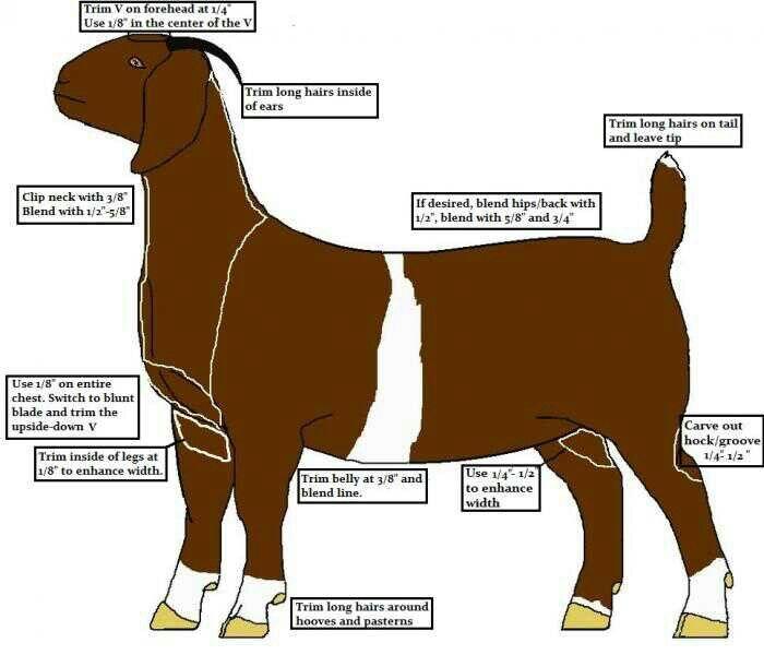 Clip chart for breeding class