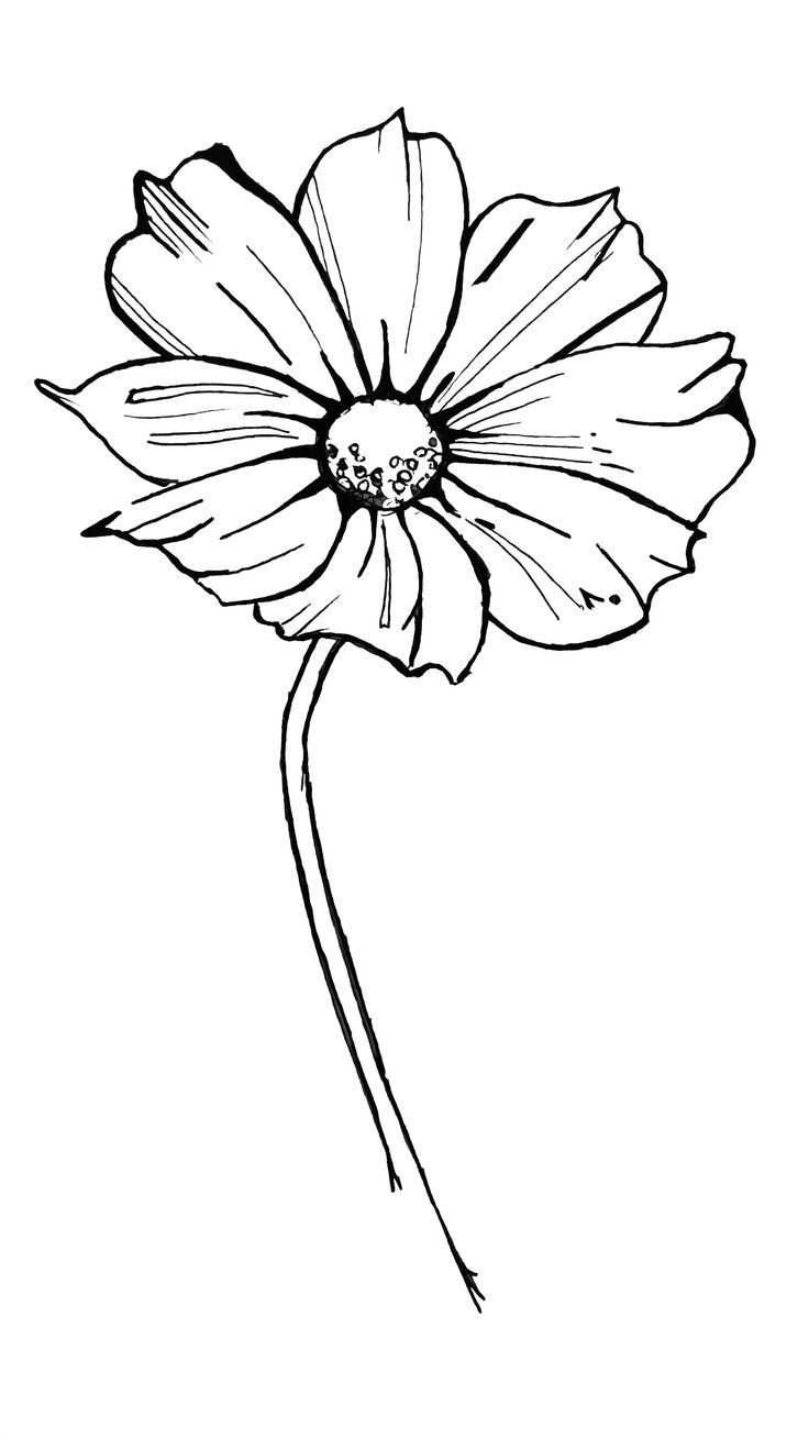 i love drawing flowers