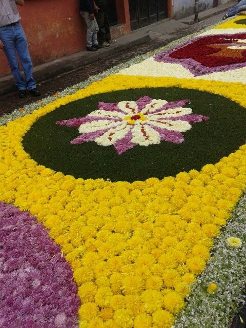 Alfombra hecha d flores naturales .24 hrs para hacerla.
