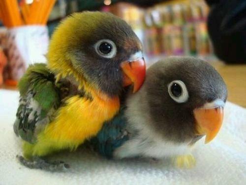Baby Parrots!!!!