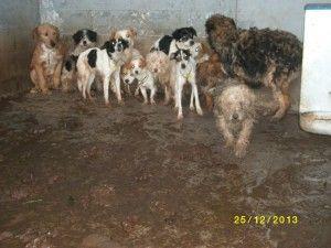 ANDALUCÍA, COMUNIDAD FRACASADA: LA REALIDAD DE LA SOCIEDAD PROTECTORA DE ANIMALES DE MAIRENA DEL ALJARAFE – SEVILLA | Desde Marbella