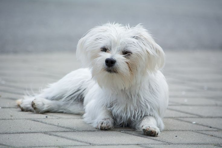 Just because you're allergic to dogs doesn't mean you can't one—you just have to pick the right one. There are tons of beautiful hypoallergenic dog breeds.