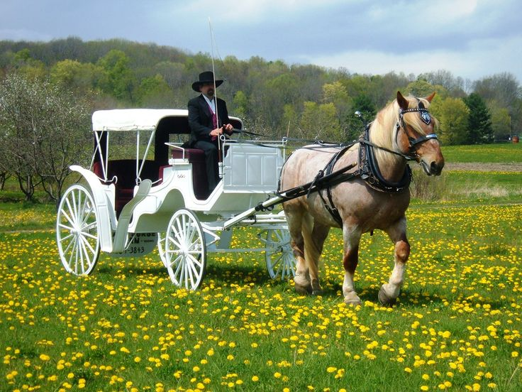 horse wagons - Google Search