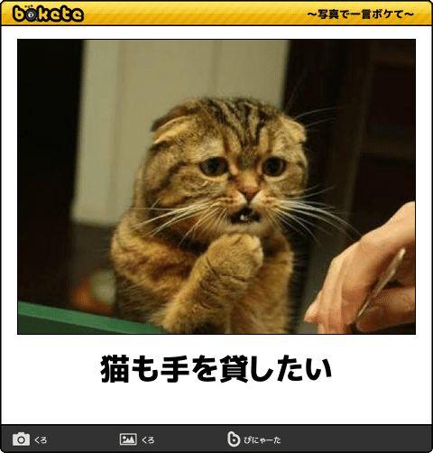 猫も手を貸したい