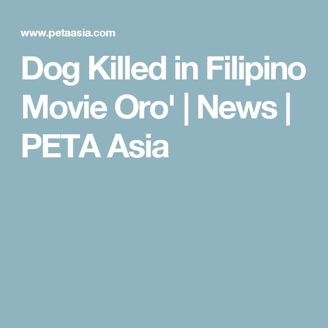 Dog Killed in Filipino Movie Oro' | News | PETA Asia