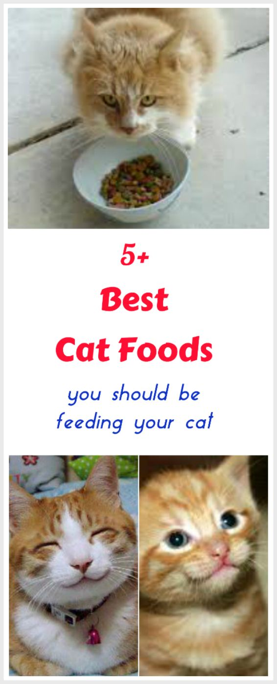Want the best food for your cat? Our top 5 cat foods are chosen for their higher quality ingredients and their approximation to a cat's natural diet in the wild - mainly the kinds of foods cats hunt. The cat food brands we recommend are made with more high quality  proteins and less fillers, colors or by-products than other cat foods.... see more at PetsLady.com ... The FUN site for Animal Lovers