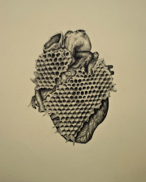 """""""My heart is a honey comb"""". Vintage inspired anatomical drawing with a twist by Andy van Dinh great way of incorporating things into the organs must try and replicate to an extent"""