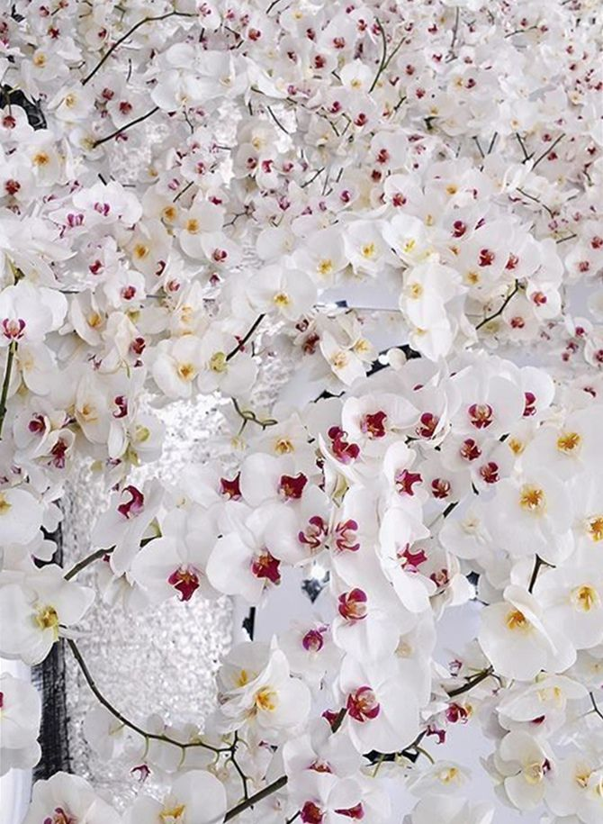 150.000 orquídeas brancas na apresentação da Christian Dior fall 2014   tempodadelicadeza
