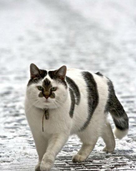 neko   http://www.yukawanet.com/archives/4216038.html#  雪國的貓Funny Kitty, Funny Face, Stars Face, The Face, Pets, Fat Cat, Fur, Flower, Animal