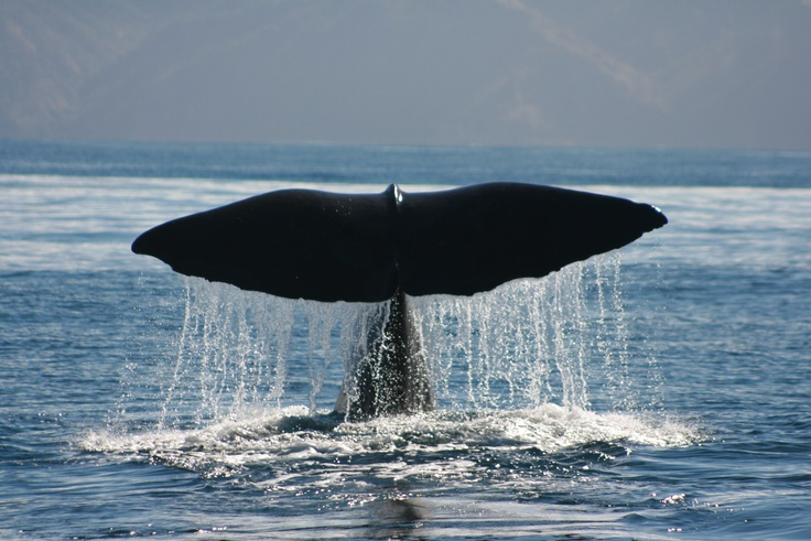 See a whale, in the wild.
