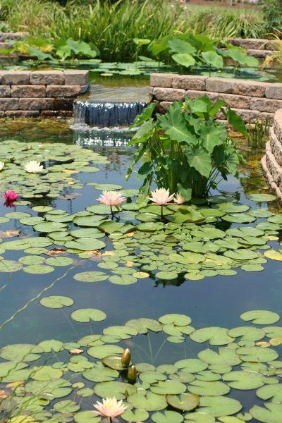 98 best pond bog filter ideas and designs images on for Garden pond life