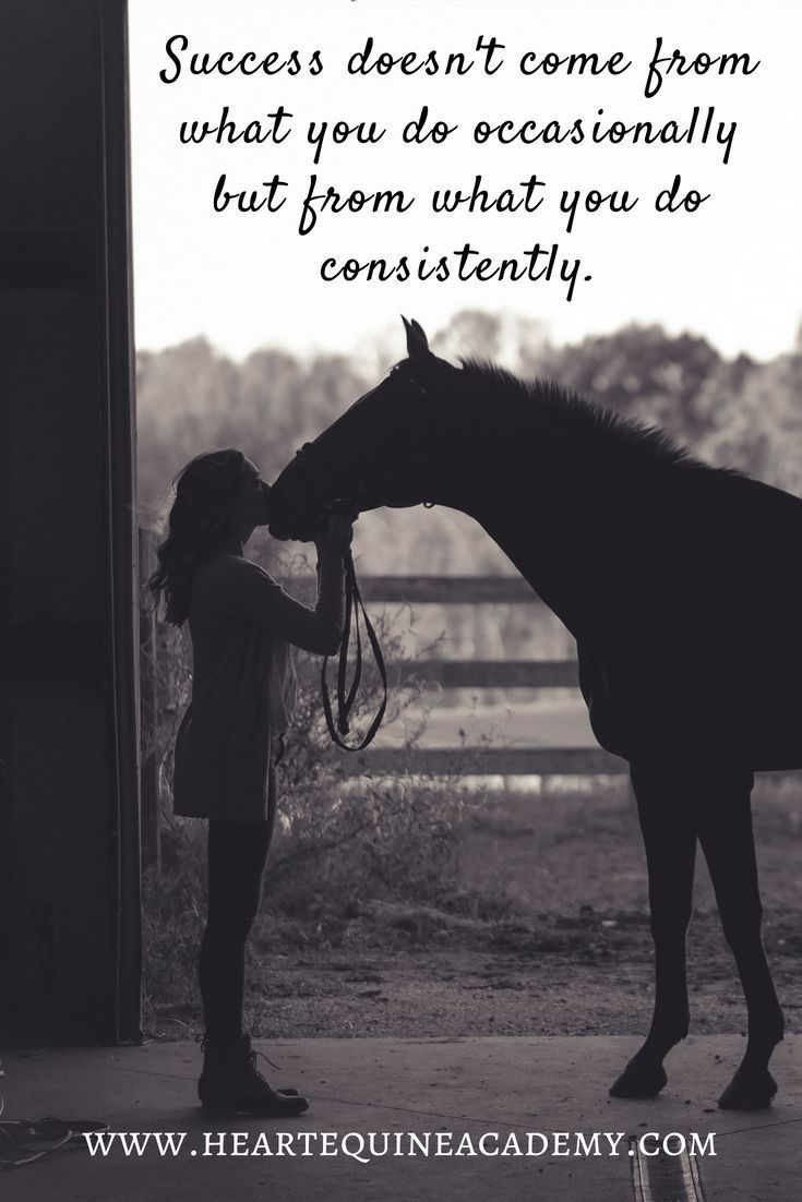 Horse Quotes | Riding Motivation \