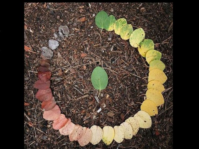 Circle of Life - Via thenewspatroller.comNature, Autumn, Leaf Cycling, Circles Of Life, Art, Life Cycling, Colors Wheels, Life Cycles, Leaves