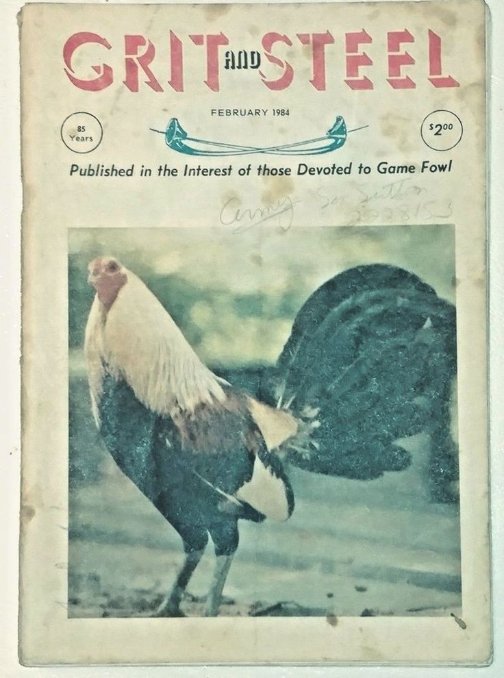 Grit and Steel Game Fowl Magazine, February 1984 Color  print cover