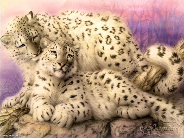 Stora katter - bakgrundsbilder: http://wallpapic.se/djur/stora-katter/wallpaper-32244