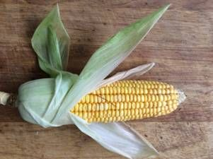 Kukuřice – otisk, kresba tuší