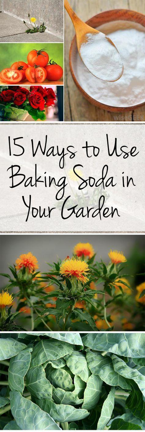 Baking soda, baking soda hacks, gardening hacks, baking soda gardening, gardening with baking soda, popular pin, outdoor hacks, gardening tips, must know gardening tips.