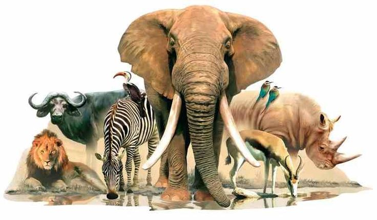 Muursticker jungle dieren: Olifant, Leeuw, Zebra - Junglekamer