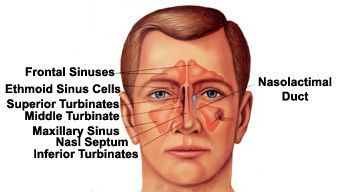 Symptoms of SINUSITIS may include a sensation of pressure in the face where the sinuses are located, post nasal drip, congestion, runny nose, sore throat, cough, thick nasal drainage, and often perpetually worsening symptoms after 5 days. The sinuses allow for the natural drainage of mucous, and an inflamed or affected sinus cavity will not allow for the normal draining of mucous from the sinuses, causing pain, pressure, and a general feeling of being ill. #sinusitis #medicalook