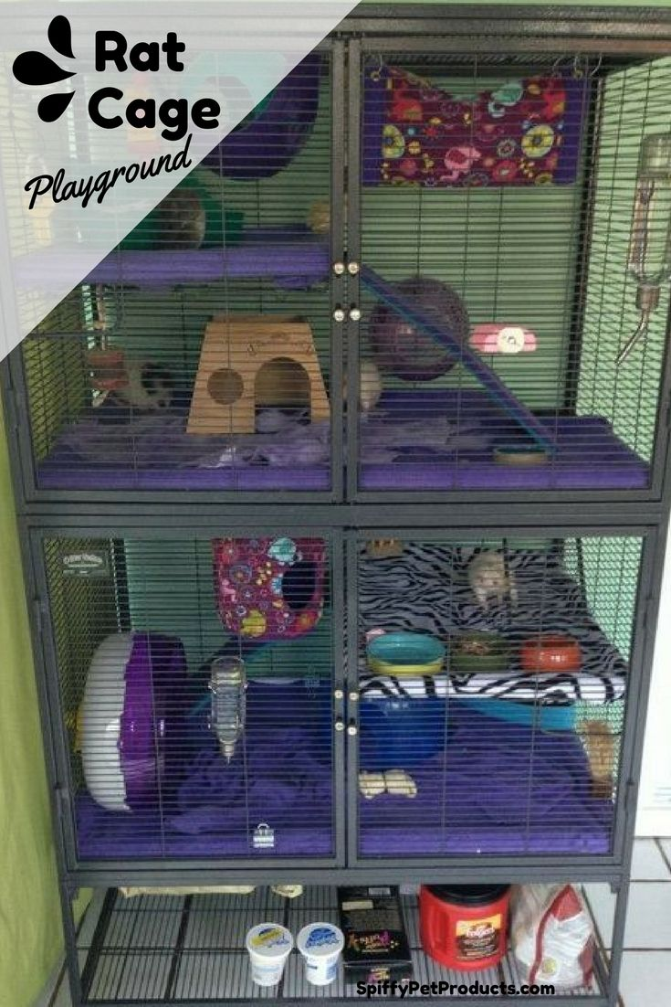 7 Pet Rat Cage Ideas You Have Got To See To Believe Pet Rats