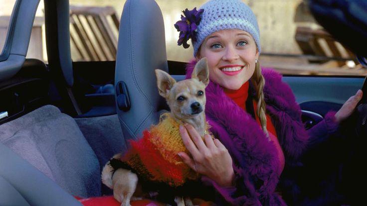 RIP Bruiser: Elle Woods' Beloved Dog Has PassedAway | StyleCaster