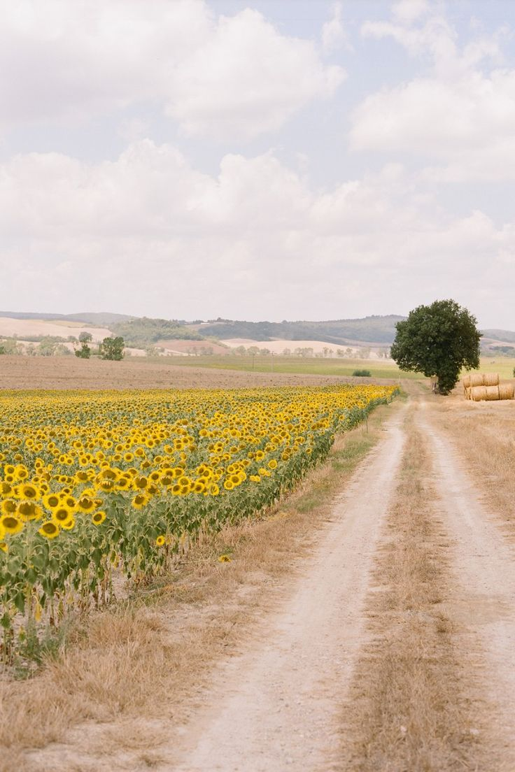 Tuscany, Italy. One of the most beautiful traits about Europe in the summer is the sunflowers.
