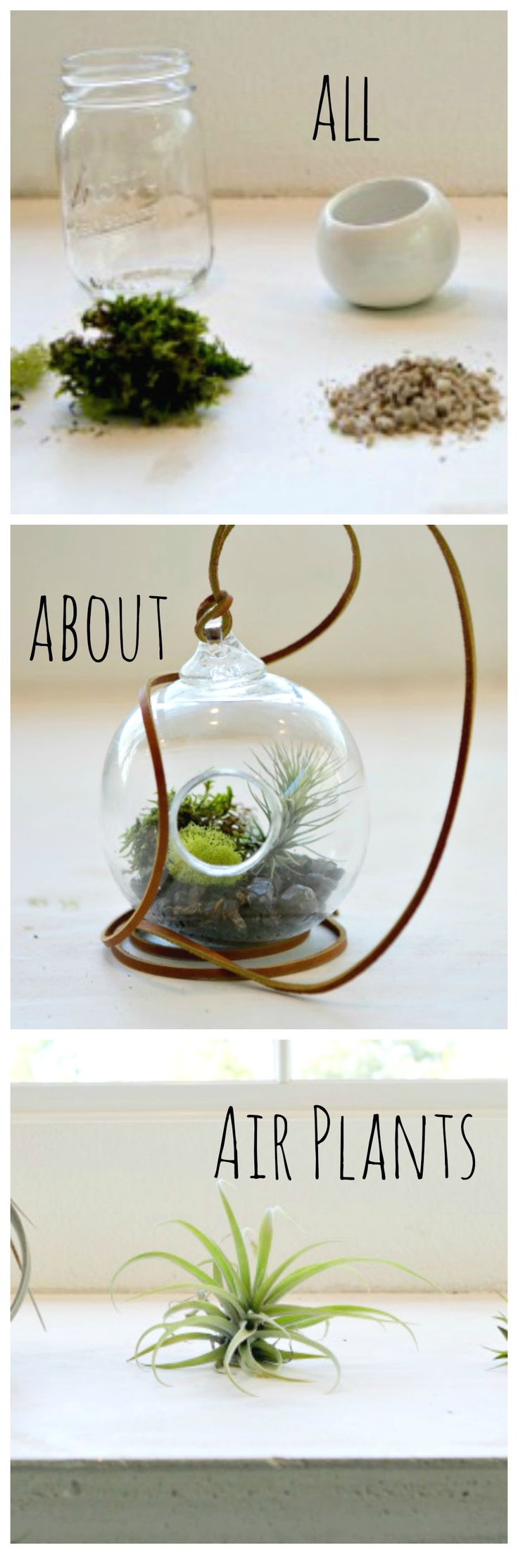 88 best air plants tillandsia images on pinterest for Indoor gardening kalamazoo