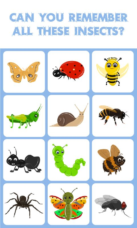 Insects Match: Memory Match Game: is a concentration-style educational memory game for kids to learn about different kinds of insects. Kids of all ages and grades can enjoy this insects memory game along with their parents, grandparents as it's going to activate some areas of their brain responsible for memory acquisition which therefore can help their memory improve.