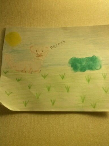 Ferret drawing i made