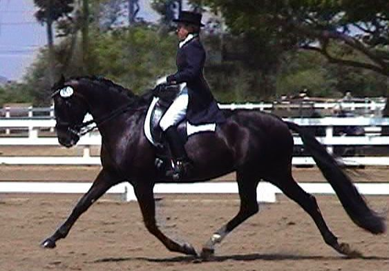 Will Faerber Classical Dressage Clinic-save the date - Las Vegas Equestrians (Las Vegas, NV) | Meetup