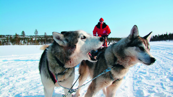 Excursion to Reindeer and Husky Farms -Rovaniemi, Lapland, Finland