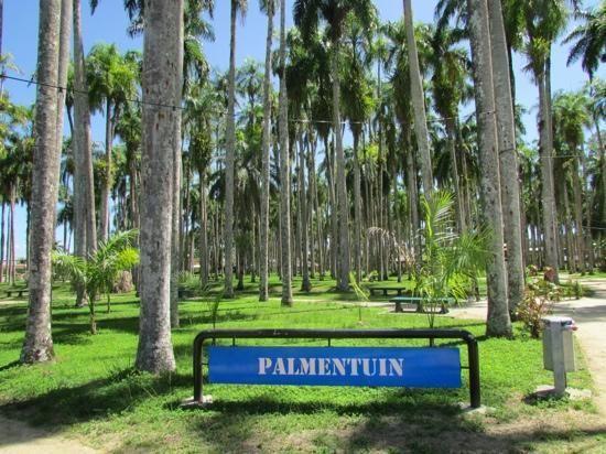 Palmentuin - Paramaribo