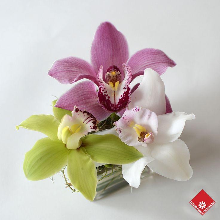A colorful trio of cymbidium orchids