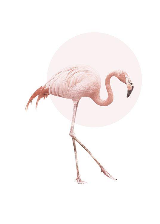 Poster mit Flamingo und rosa Kreis
