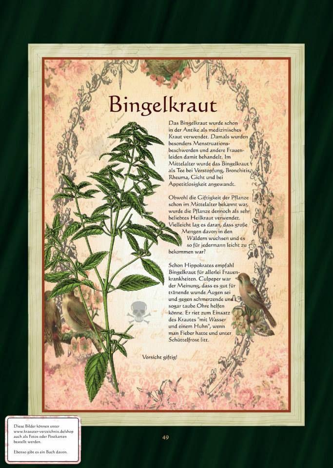 Bingelkraut