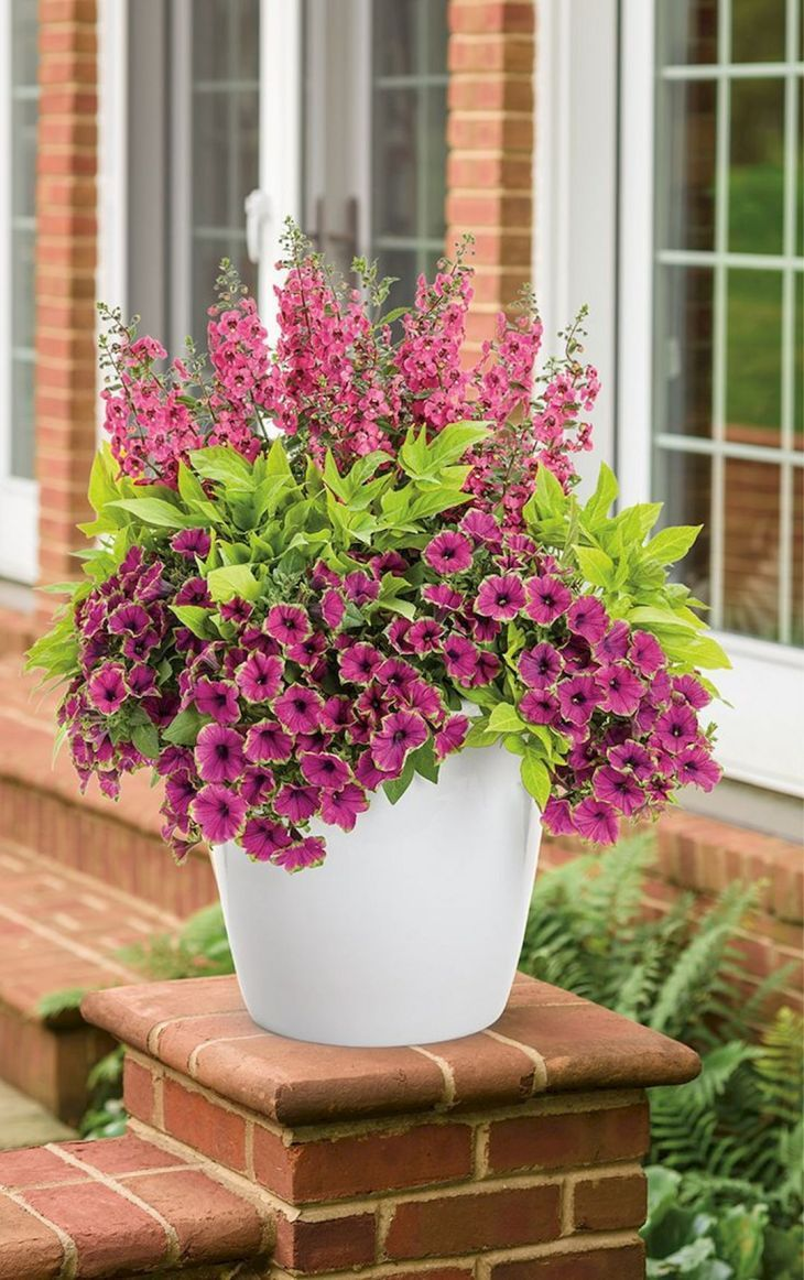 15 Most Lovely Container Gardening Flowers Concepts For Your Dwelling Entrance Porch