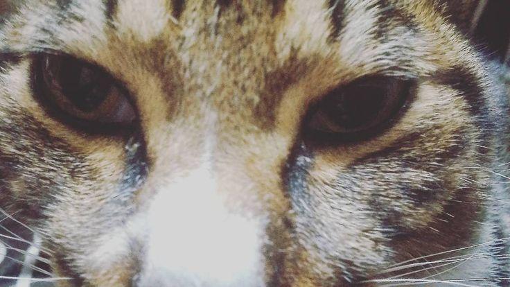 スーパードアップ #cat