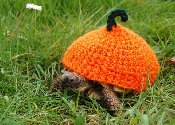 Canadian Katie Bradley has created hand-crocheted tortoise and turtle jumpers to keep pet turtles warm.