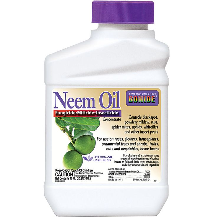 http://www.gardeners.com/buy/neem-oil-concentrate/40-027.html  THIS is what I use to control insects, black spot& other pesty attacks that come after our garden, roses and fruit shrubs or trees. Excellent remedy!
