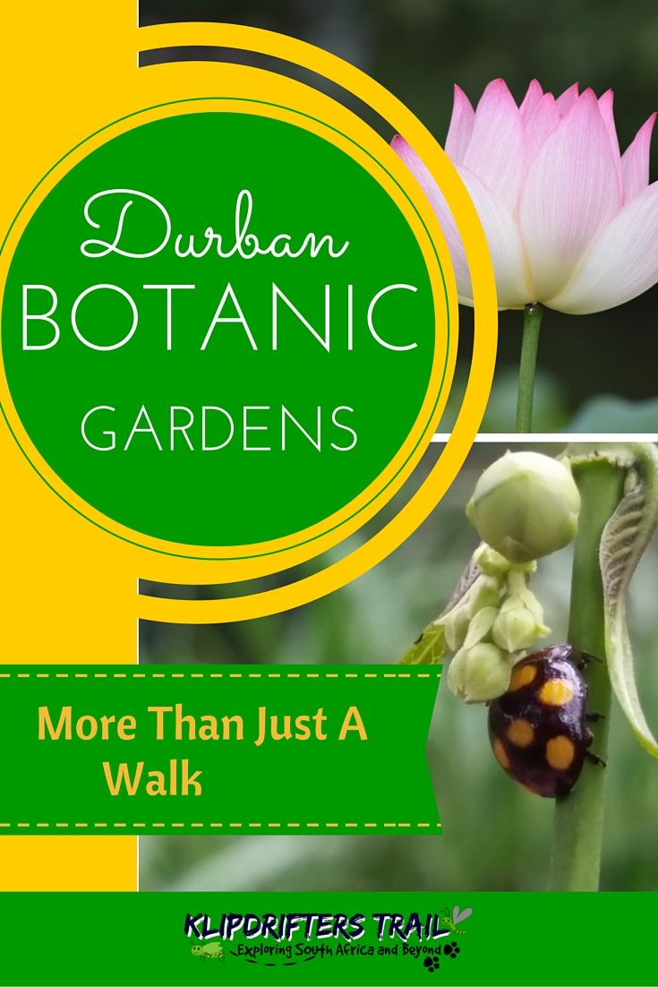 DURBAN BOTANIC GARDENS is more than just a walk in the park. A photographer and birders paradise. Suitable for the whole family. Visit http://www.klipdrifters.com/durban-botanic-gardens/ #durbanbotanicgardens #durban #southafrica #gardens #birding #photographer #attraction