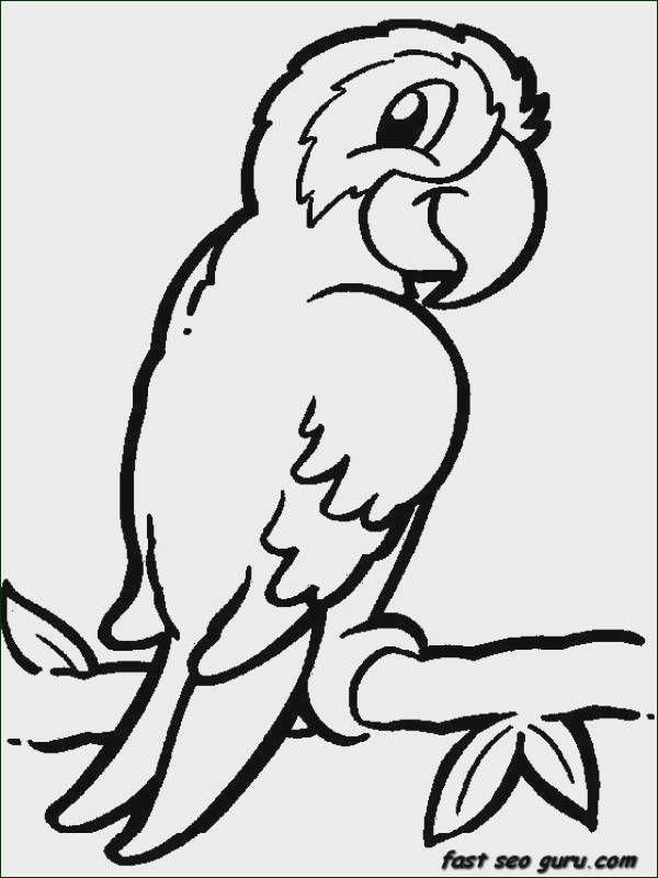 Jungle Bird Parrot Coloring Pages Printable For Kids Halaman Mewarnai Gambar Hewan Gambar Burung