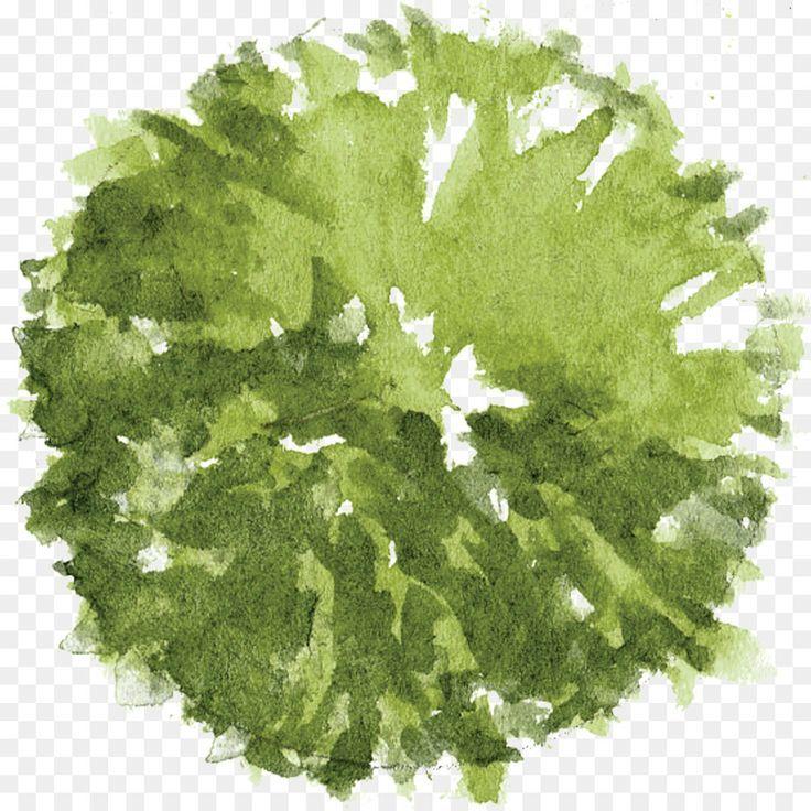 Tree Architectural plan Landscape architecture – T…