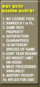 Whitetail Hunting Florida Hog Hunting Exotic Game Hunts Florida
