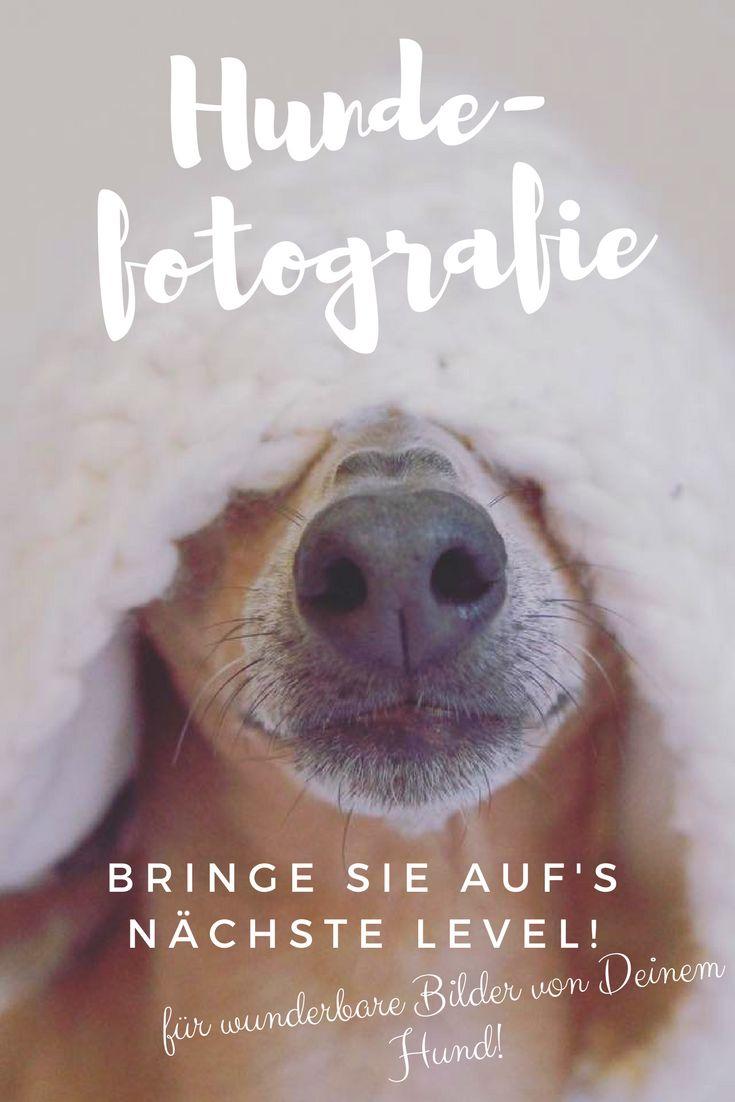 """Start der Themenreihe """"Wie Du Deine Hundefotografie auf das nächste Level bringst"""""""