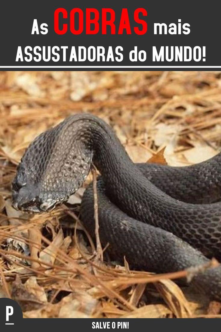 Veja No Nosso Site Quais Sao As Cobras Mais Assustadoras Do Mundo